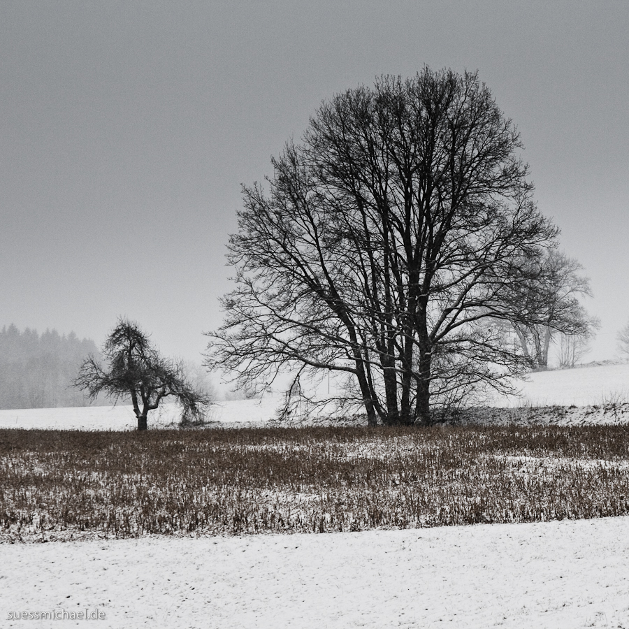 Big and small tree