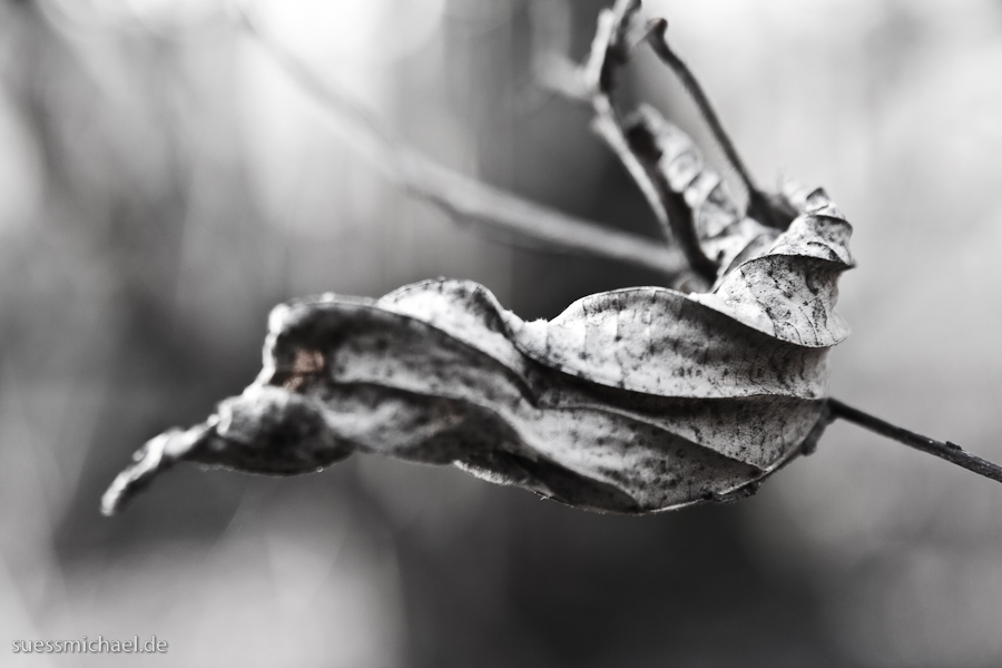 2010-03-18 Beech Leaf