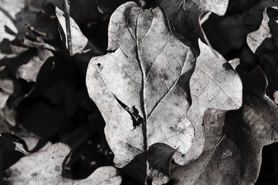 2010-03-18 Oak Leaf
