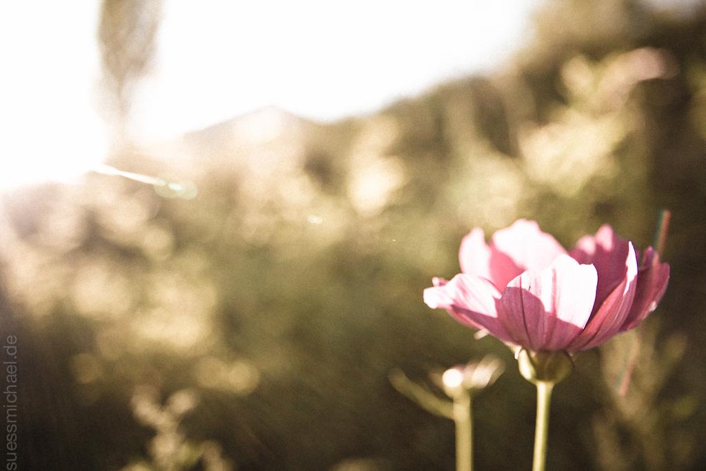 2010-07-20 Flower