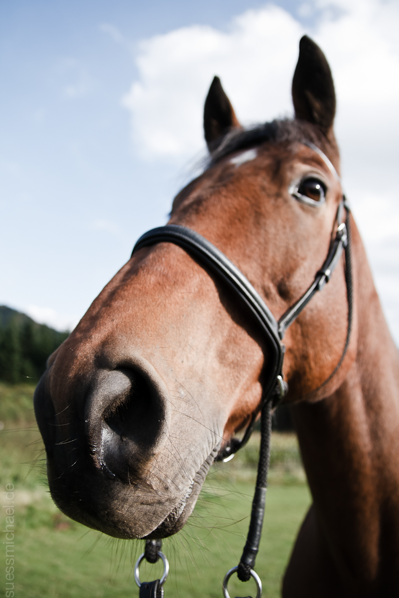 2010-09-30 Horse