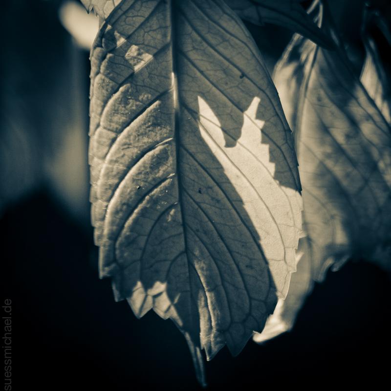 2010-10-29 Autumn
