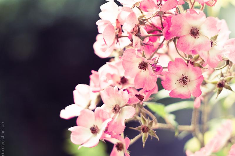 2011-06-21 Flower Macro