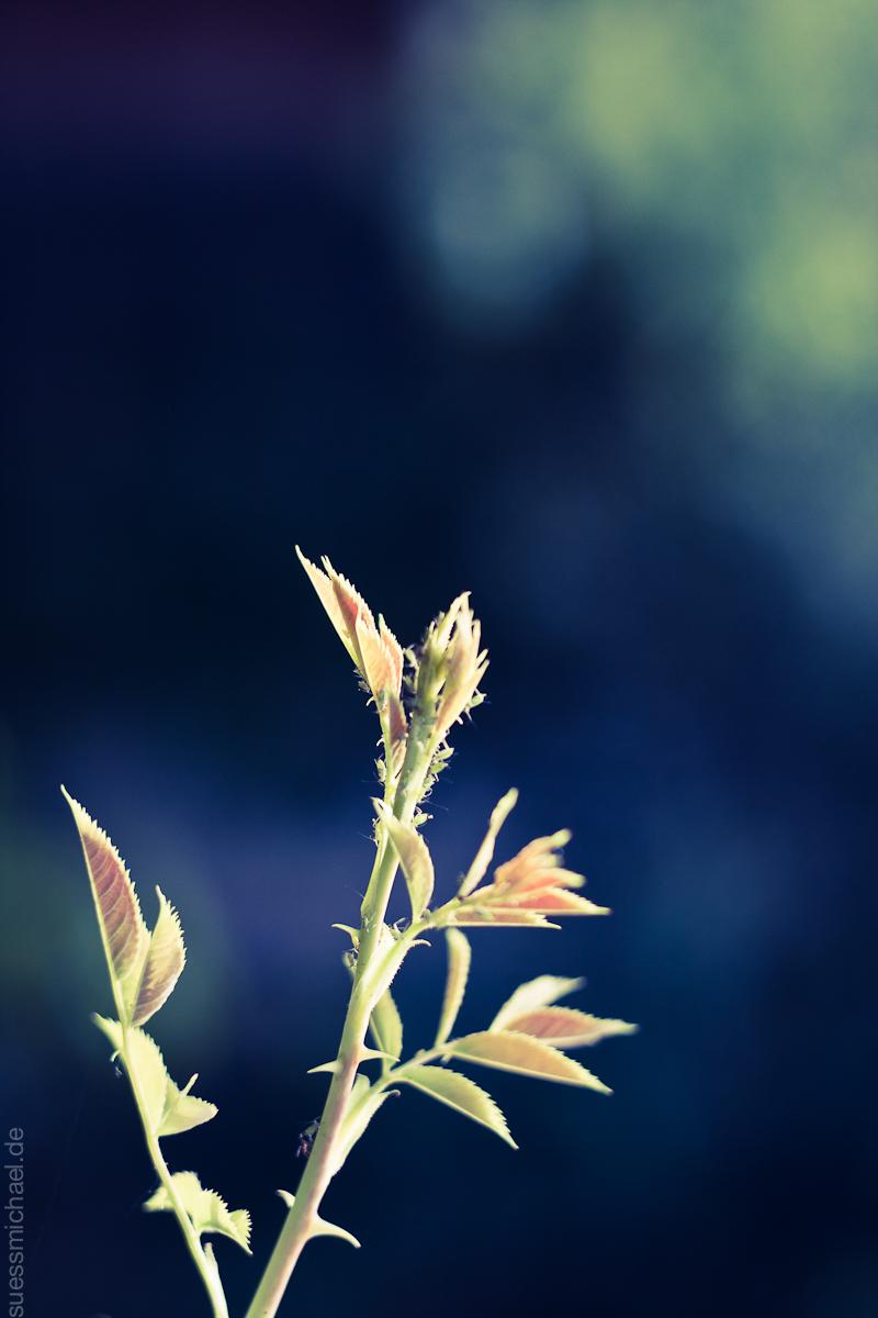 2011-06-21 Plant Macro