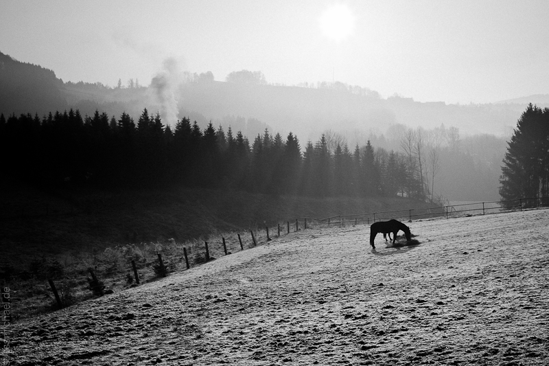 2011-03-06 Early Morning / Horse