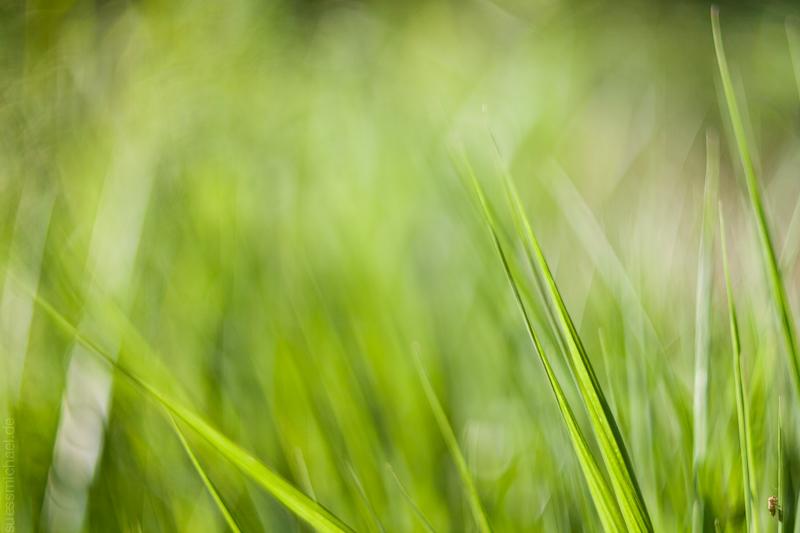 2011-07-16 grass