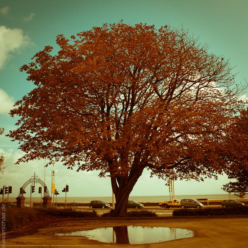 2011-09-21 tree