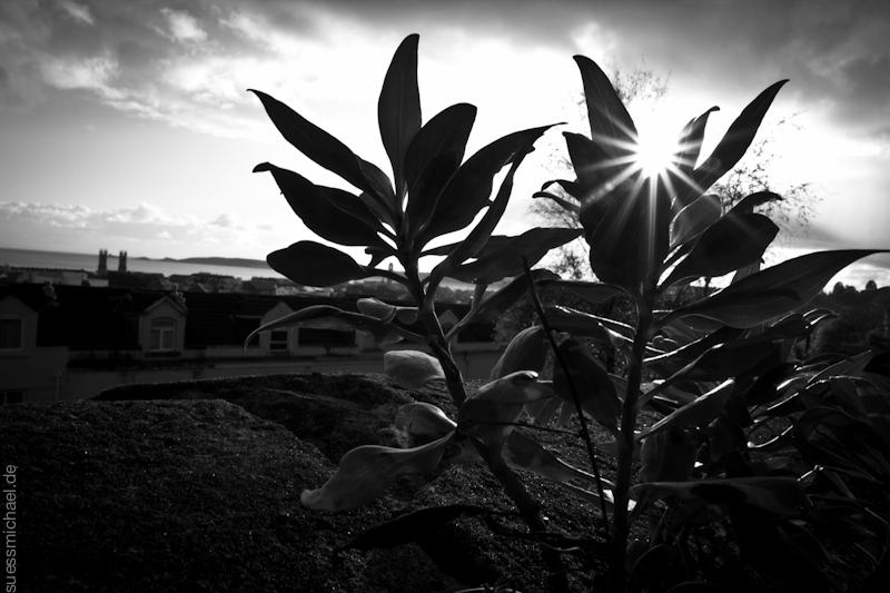 2011-10-19 Plant