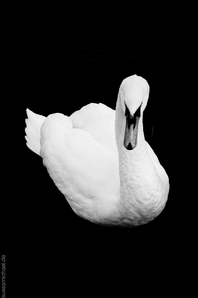 2011-12-16 London Swan