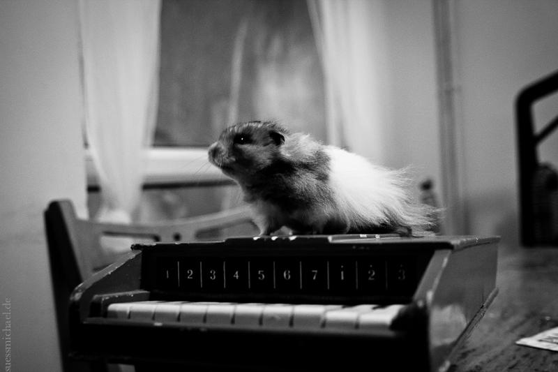 2012-01-26 A hamster called 'Panda'