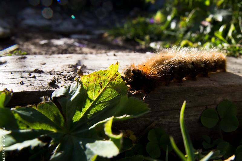 2012-08-17 caterpillar