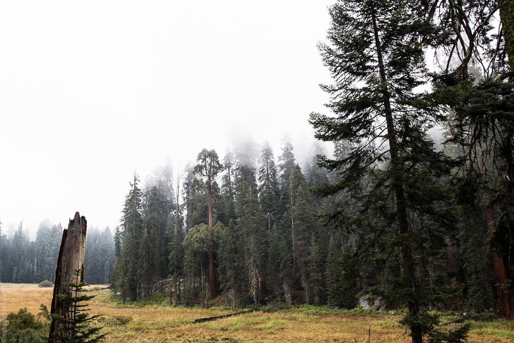 2013-09-22 Sequoia National Park