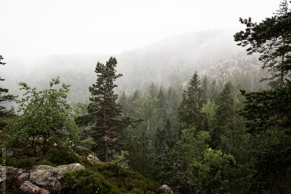 2016-06-30 Skuleskogen National Park